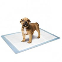 PUPPY TRAINING MAT M 10PC